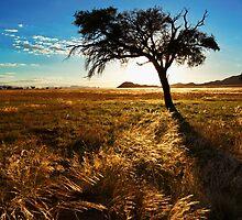 Fields of Gold by Jill Fisher