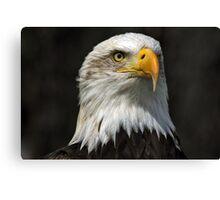 Bald Eagle Gazing Canvas Print