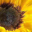 Sunflower by SusanAdey
