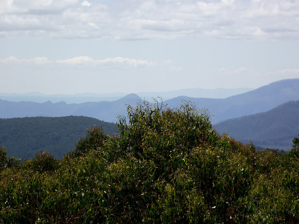 View from Lookout Tower at Mount Donna Buang by SophiaDeLuna
