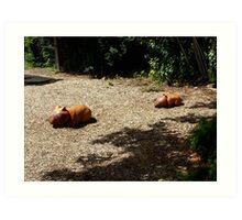 Wombat Sculptures Art Print