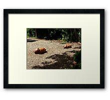 Wombat Sculptures Framed Print