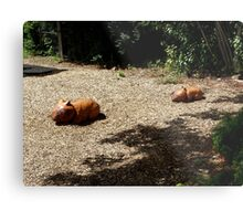 Wombat Sculptures Metal Print
