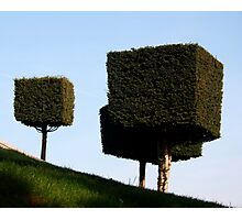 Disney Topiary 'Square Trees' Photographic Print