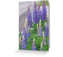 Shimmering Lupin Light Nr 1 Greeting Card