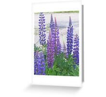 Shimmering Lupin Light Nr 4 Greeting Card