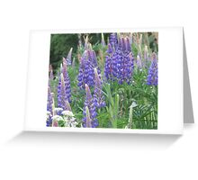 Shimmering Lupin Light Nr 5 Greeting Card