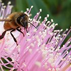In the Pink - Busy Bee by Meg Hart
