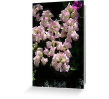 Baby pink snap dragons Greeting Card