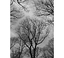 what can you see? Photographic Print