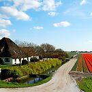 A Dutch bulb farm at its best by jchanders
