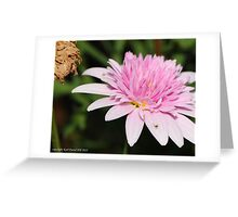 macro flora 004 Greeting Card