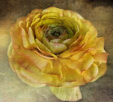 Antiqued Flower by vigor