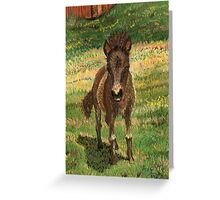Baby Foal Greeting Card
