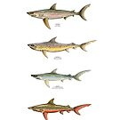 TROUT-SHARK HYBRIDS of NORTH AMERICA by CatLauncher