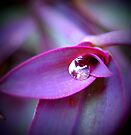 purple drop by Jamie McCall
