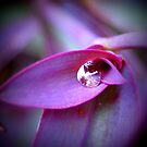 purple drop by Jamie McCall