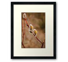 Goat Willow Framed Print