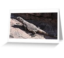 """This is really my Best Side"" - Las Vegas Chuckwalla Lizard Greeting Card"
