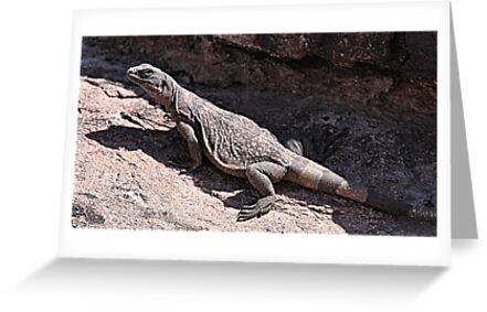"""""""This is really my Best Side"""" - Las Vegas Chuckwalla Lizard by Leslie van de Ligt"""