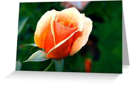Peach rosebud by ♥⊱ B. Randi Bailey
