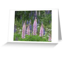 Shimmering Lupin Light Nr 8 Greeting Card