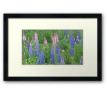 Shimmering Lupin Light Nr 9 Framed Print