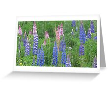 Shimmering Lupin Light Nr 9 Greeting Card
