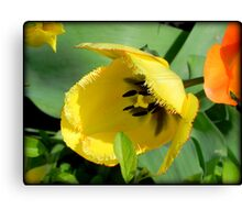 Blooming © Canvas Print