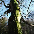 Climbing High, Enchanted Forest, Dun a Rí 2012 by ArleneMartine