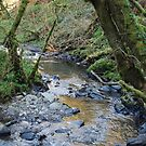 Tranquil Waters Flow, Enchanted Forest, Dun a Rí 2012 by ArleneMartine