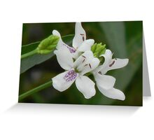 American Water Willow Greeting Card