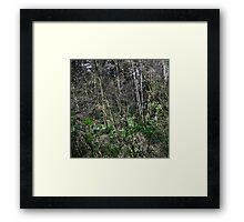forest screen Framed Print