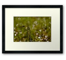 "WOoooooooohoo in mid flight  "" Sold One YAY "" Framed Print"