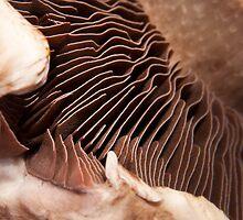 Portabella Mushroom by JulieLBateson