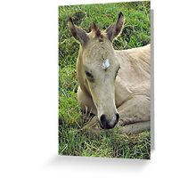 Smart Little General Greeting Card