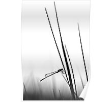 Dragon Fly- BW  Poster