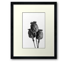 Three is it a crowd ??????? Framed Print