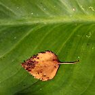 Leaf on Leaf by Stephen Mitchell