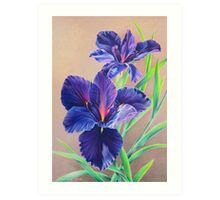 Dark Knight Purple Iris Art Print