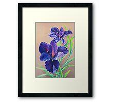 Dark Knight Purple Iris Framed Print