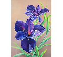 Dark Knight Purple Iris Photographic Print