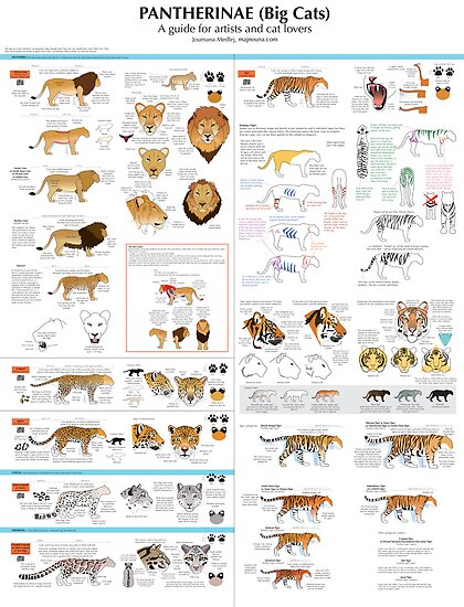 Joumana Medlej › Portfolio › Pantherinae (big cats) chart for ...: www.redbubble.com/people/cedarseed/works/6641801-pantherinae-big...