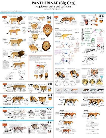 Cat Breed Comparison Chart