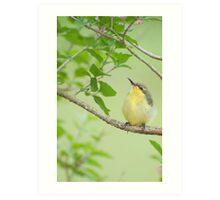 Hi Mum - baby sunbird in my garden. Art Print