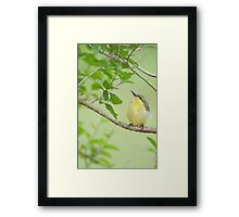 Hi Mum - baby sunbird in my garden. Framed Print