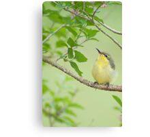 Hi Mum - baby sunbird in my garden. Canvas Print
