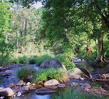 cedar creek  nsw ... by gail woodbury