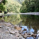 Kaitoke Regional Park, North Island, New Zealand by DeliaA