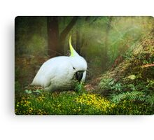 Forage the Forrest Floor Canvas Print